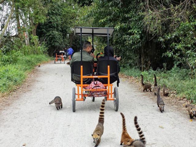 Passeio de Triciclo Parque Ecológico do Tietê
